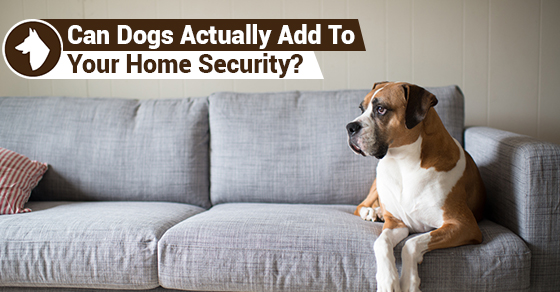 Can Dogs Actually Add To Your Home Security